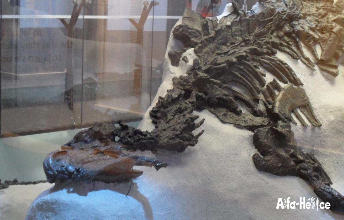 Los iguanodontes de Bernissart