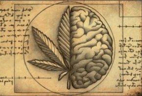 La práctica hace al maestro, las drogas… aladicto