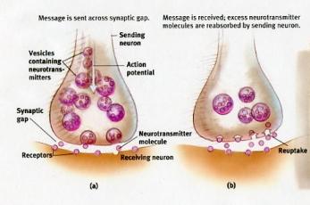 Recaptación de la serotonina