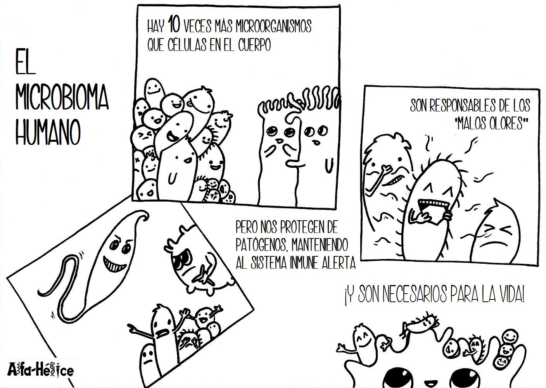 El microbioma humano   Alfa Hélice