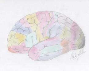 El cerebro y susáreas